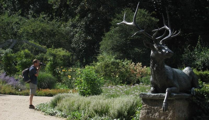 Rosen- im Tier-Garten