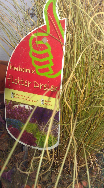 HERBSTMIX FLOTTER DREIER