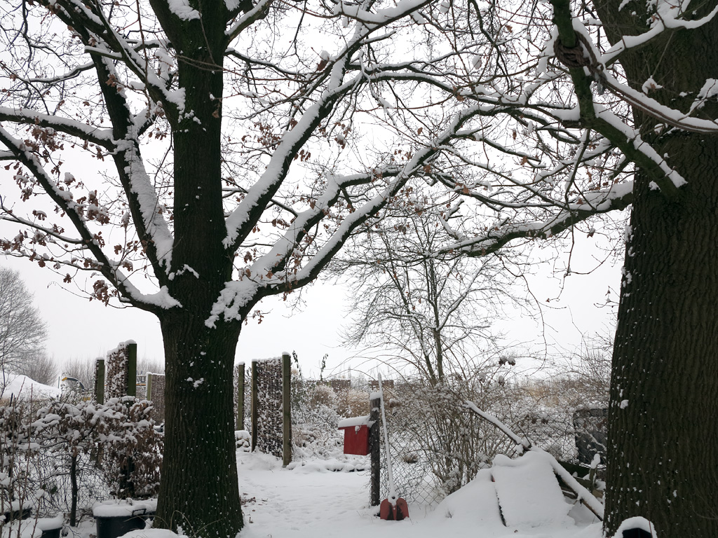 die zwei Eichen im Schnee