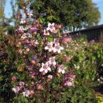 Blüte Mystica