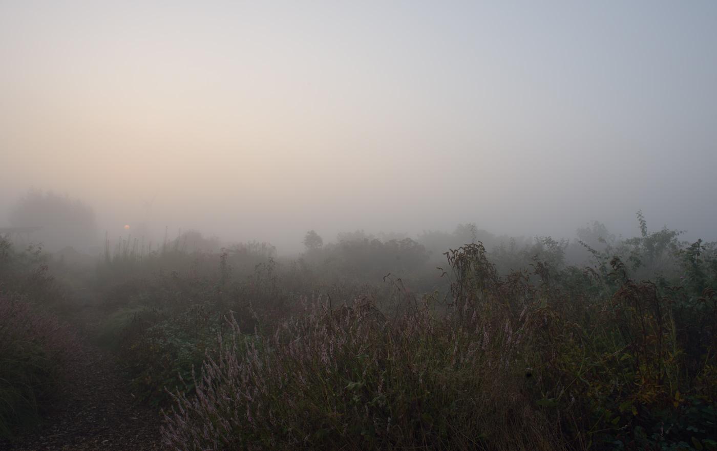 Sanguisorba und Kerzenknöterich im Nebel
