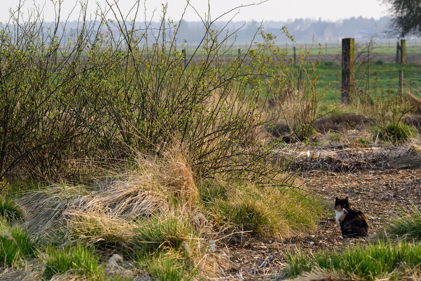 Katzen Archive Garten Alst