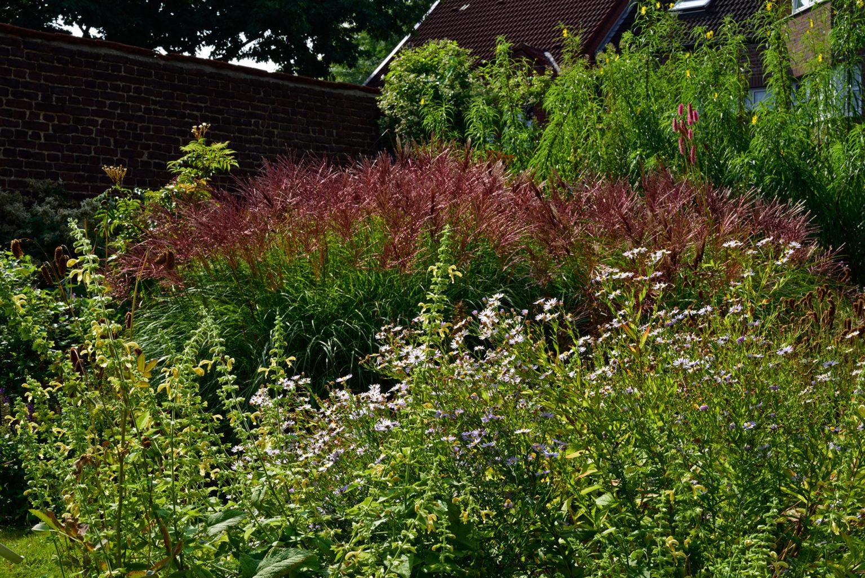Im Gierschgarten benötigen wir schneckenresistente Platzhirsche (C) Aconogonon sp. 'Johanniswolke', Miscanthus sinensis 'Red Chief' und Helianthus salicifolius var. orgyalis, Performer (CR) Kalimeris incisa und Nachhaltige Performer (C-CR) Sanguisorba-Hybride 'Blackthorn' und Ausgeglichene für die Fläche (C-CSR) wie Salvia glutinosa.